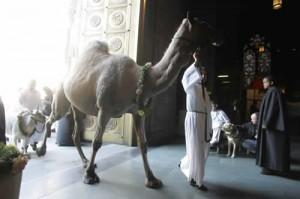Camel coming thru door